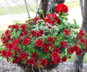 Hanging Baskets Made Simple