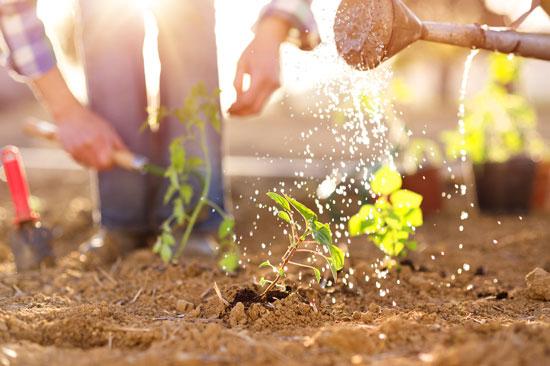 Gardening with fewer chemicals in orlando fl