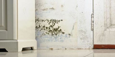 Preventing and Getting Rid of Mold