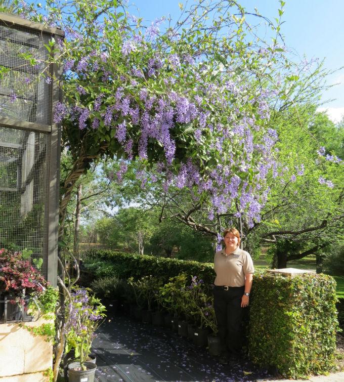 Purple-of-Queens-Wreath_Cheryl_WEB
