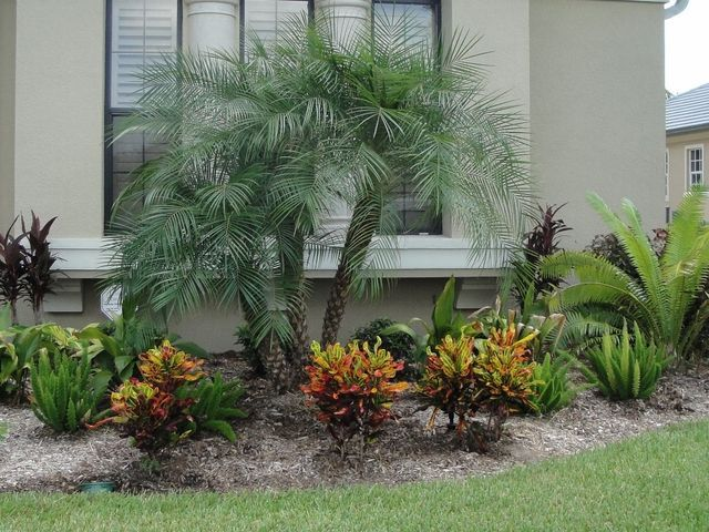 Beautiful and Easy Landscape Plants for Orlando, FL