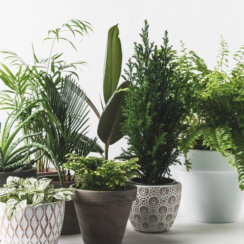 Orlando Avenue Blog House Plants For Dark Rooms